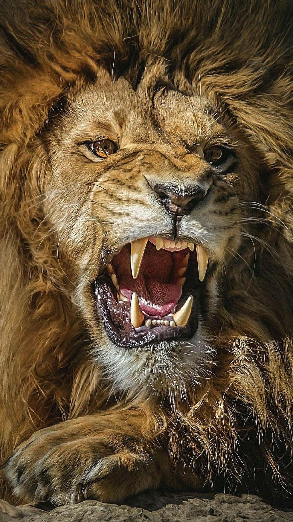 Blog Lion of Judah
